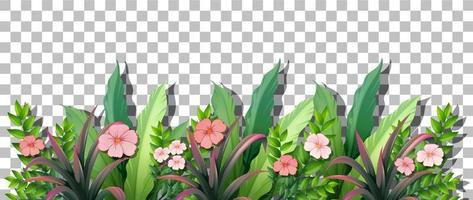 Various tropical plants isolated vector