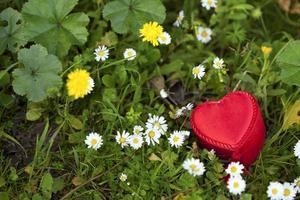 Caja de regalo con forma de corazón sobre césped y flores de margarita foto