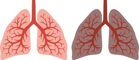 pulmón sano y fumador antes y después de toda una vida fumando vector