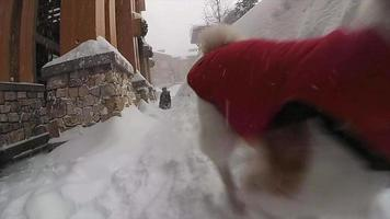 Ein Hund spielt im Schnee in einem Skigebiet. video