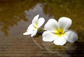 Two flowers placed on the water. Of cement floor photo