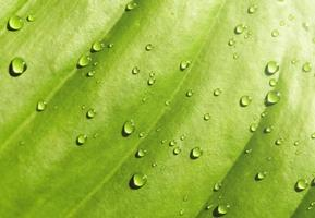 Green leaf with drop of water in the morning photo