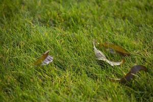 montón de hojas de otoño sobre la hierba hierba verde foto