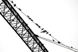 pájaros en alambres contra el cielo foto