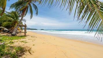 Fondo de verano de palmeras de coco en la playa de arena blanca foto