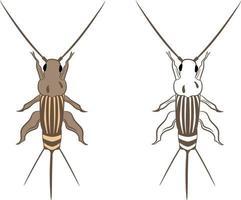 Cricket or Grylloidea Vector