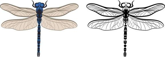 Dragonfly or Anisoptera Vector Illustration