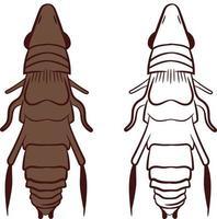 Flea or Siphonaptera Vector Illustration