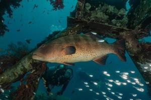 peces nadan en el mar rojo, peces de colores, eilat israel foto
