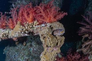 Arrecifes de coral y plantas acuáticas en el mar rojo, eilat israel foto