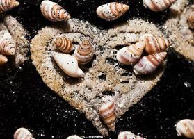 Sea Animal Dried Fish and Seashell photo