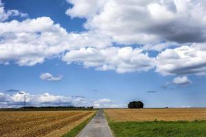 campo de espigas de plantas agrícolas en la naturaleza foto