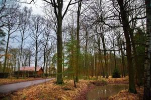 hermoso bosque en la temporada de otoño foto