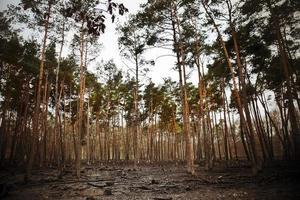 bosque y barro arcilloso foto