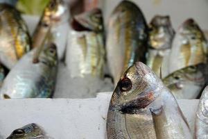 Raw Fish Food on Ice photo