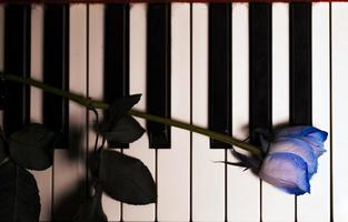 Flora Flower Blue Rose on Musical Instruments Piano Keys photo