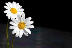 hermosa fauna flor natural vista de margarita foto
