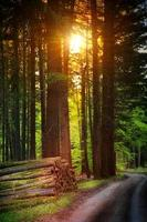 hermoso bosque en la temporada de otoño y la luz del sol foto