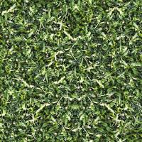 textura de suelo de hierba verde transparente foto