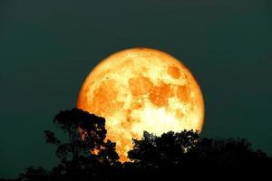 cosecha completa luna de sangre y silueta del árbol superior en el cielo nocturno foto