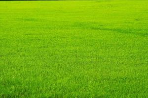 Nature green grass in field background photo