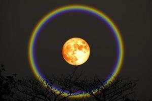 cosecha halo de luna de sangre sobre los árboles superiores en el cielo nocturno foto