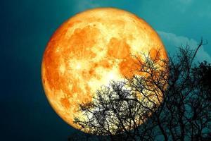 luna llena de sangre de dólar y árbol de silueta en el cielo nocturno foto