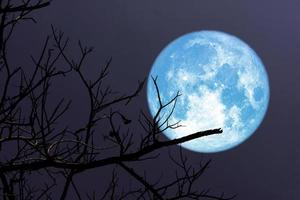 super luna azul y silueta de rama de árbol en el cielo nocturno foto