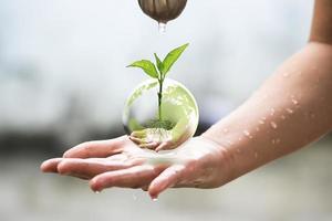Las palmas protegen la bola de cristal de la tierra con capullos de plantas en el interior. foto
