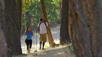 pareja, excursionismo, aire libre, a través de árboles video