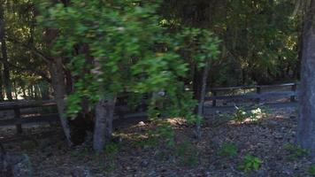 pareja, excursionismo, aire libre, por, bosque video