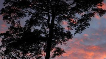 färgglad solnedgång och träd video