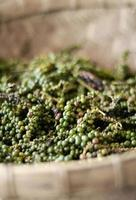 Pods of raw freshly picked organic kampot green peppercorns in Cambodia photo