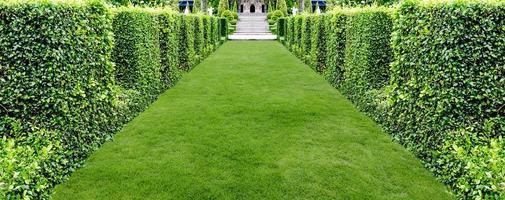 beautiful green grass walkway for background photo