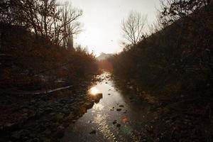 río en el bosque foto