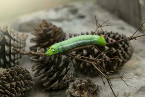 Green worm caterpillar animals photo