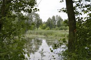 Hermoso pantano de hierba reed que crece en la orilla del depósito foto