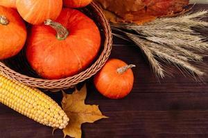 Feliz día de acción de gracias. calabazas naranjas maduras, trigo y maíz foto