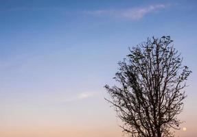 silueta de árbol y la luna llena en el cielo de la tarde foto