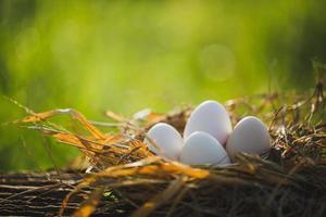 huevos en el nido con hora de la mañana foto