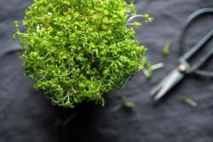 Vista superior de microgreens frescos en una olla. foto