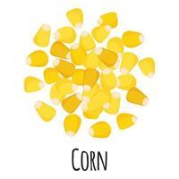 maíz para el diseño, la etiqueta y el embalaje del mercado del agricultor de la plantilla. vector