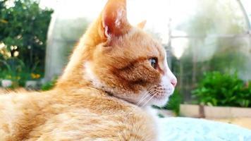 Ginger cat close up photo