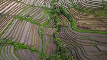 Aerial video in an amazing landscape rice field