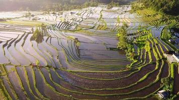 video aereo in un fantastico paesaggio di risaie