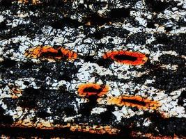 Destroyed cells micrograph photo