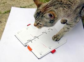 gato leyendo anotador foto