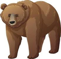 Grizzly bear animal on white background vector