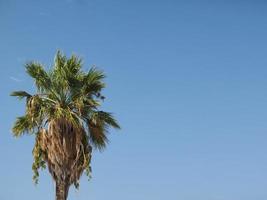 palmera sobre cielo azul foto