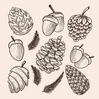 Pinecone Hand Draw Icon Set vector
